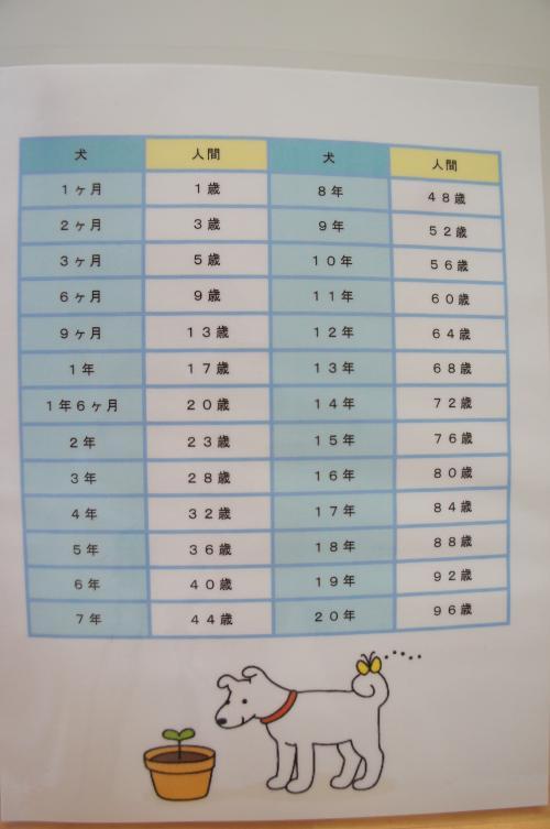 11DSC03532_convert_20120907164115.jpg