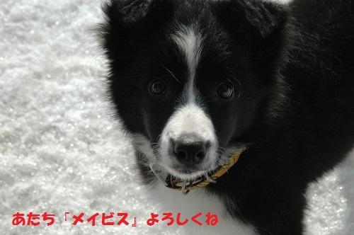 20123111_20120515175043.jpg