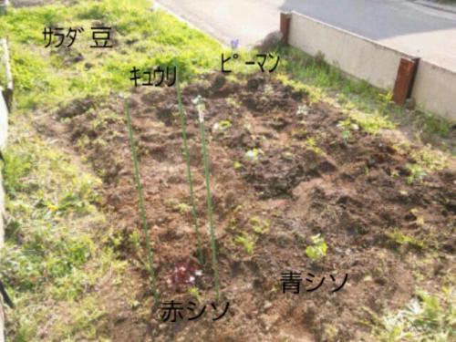 moblog_68c15203.jpg