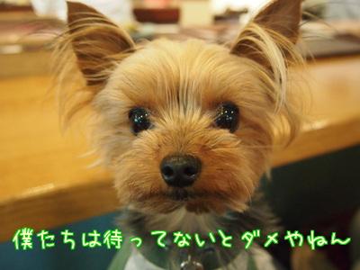 20120503大泉