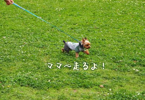 20120503大泉⑪
