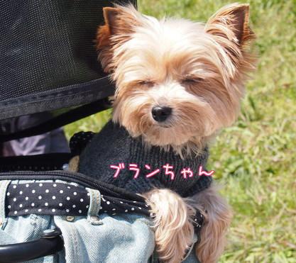 20120408八幡お花見②