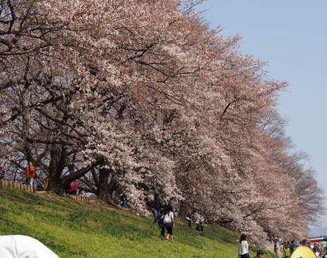 20120408八幡お花見⑯
