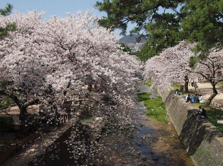 20120412夙川
