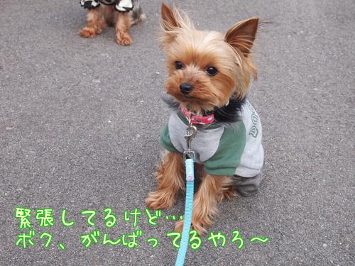 20120512宝塚⑭