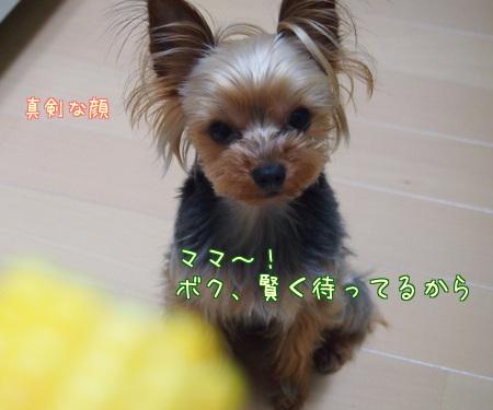 20120526宮①