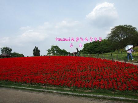 和音 お散歩 (2)