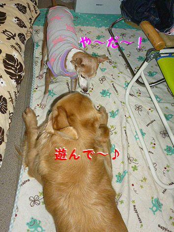 a_20120928074248.jpg
