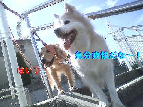 a_20121011073741.jpg