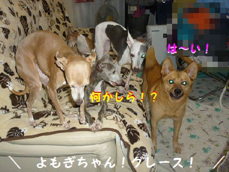 a_20121018074808.jpg