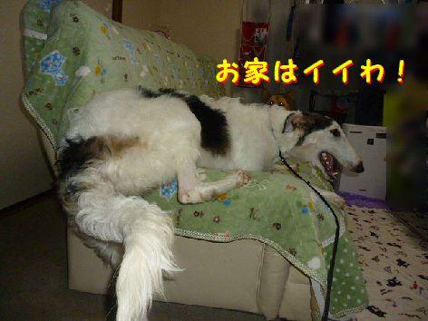 a_20121021082643.jpg