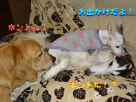 a_20121104082715.jpg