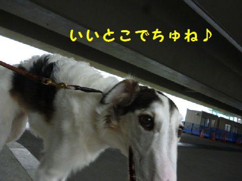 a_20121119073226.jpg