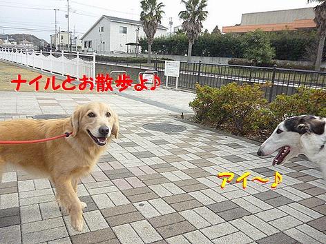 a_20121201094354.jpg