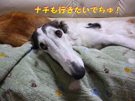 a_20121224103019.jpg