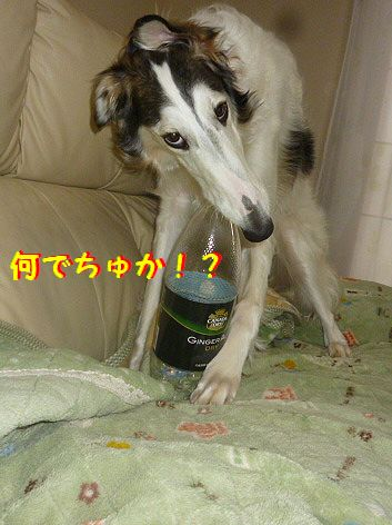 a_20130221075304.jpg