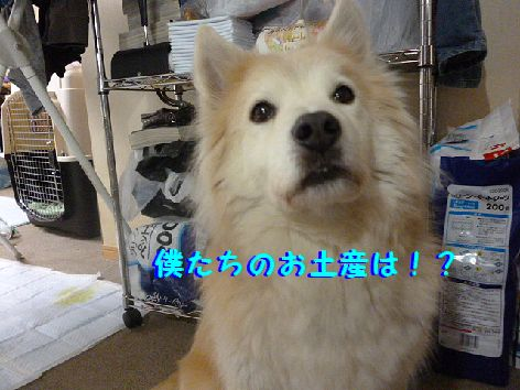 a_20130223131743.jpg