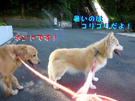 b_20120926073438.jpg