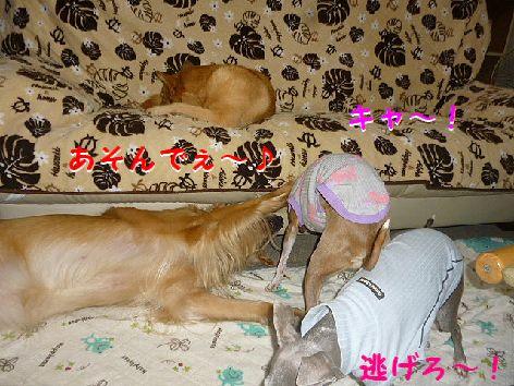 b_20120928074248.jpg
