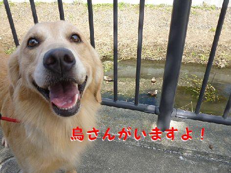 b_20120930080135.jpg