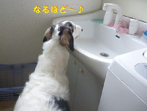 b_20121024073752.jpg