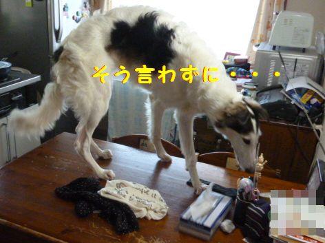 b_20121126074946.jpg