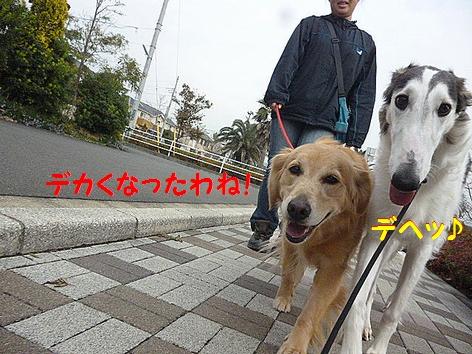 b_20121201094354.jpg