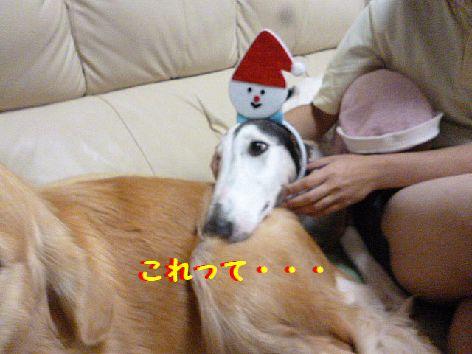 b_20121202084453.jpg