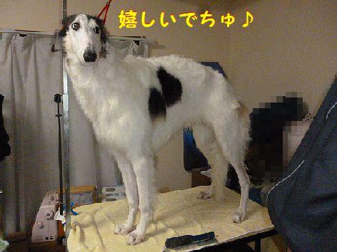 b_20121220075000.jpg