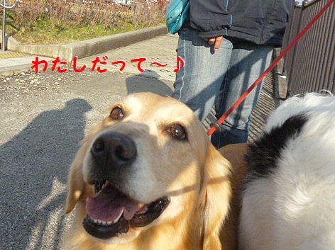 b_20121222094805.jpg