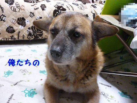 b_20121231100516.jpg