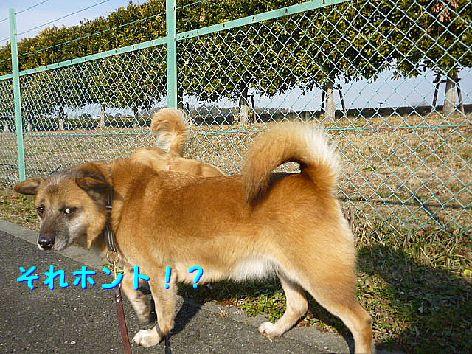 b_20130111074846.jpg