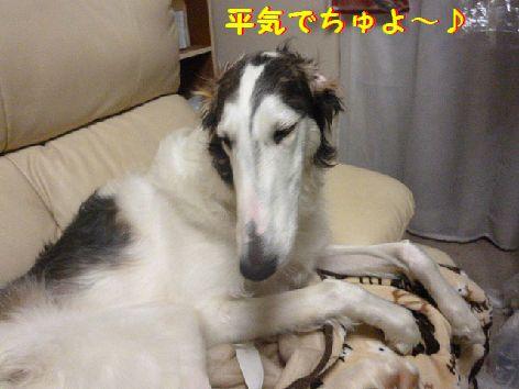 b_20130120083123.jpg