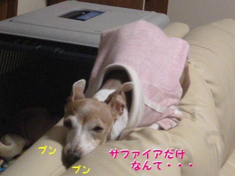 b_20130217105725.jpg