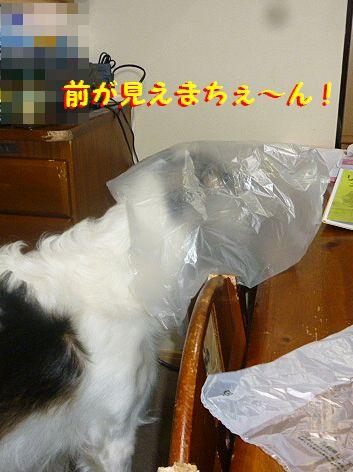 b_20130219074941.jpg