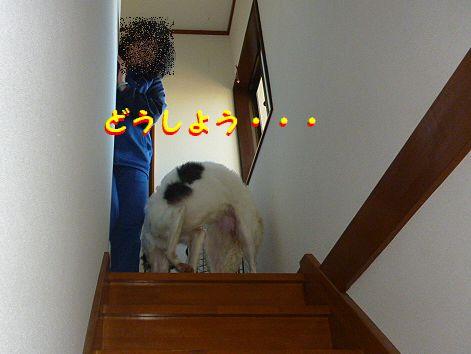 c_20121025074256.jpg