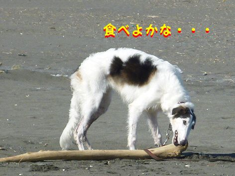 c_20121122074918.jpg