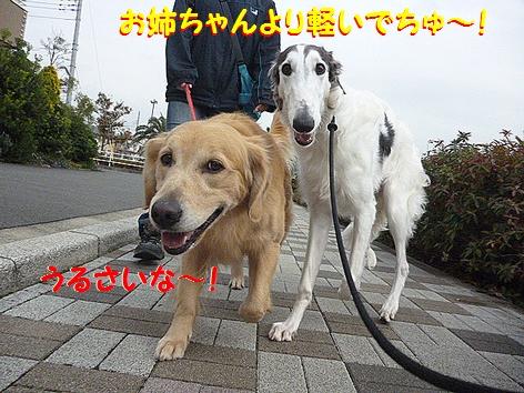 c_20121201094353.jpg