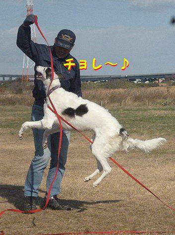 c_20121212074502.jpg