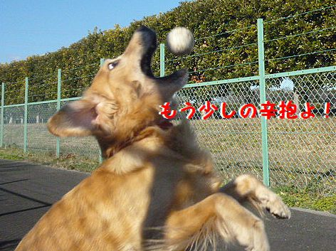 c_20121230104445.jpg