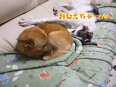 c_20130110075113.jpg