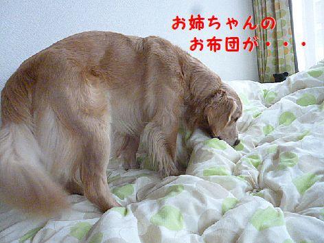 c_20130220075312.jpg