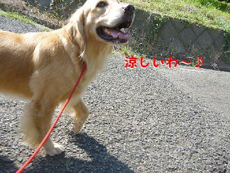 d_20120922080142.jpg