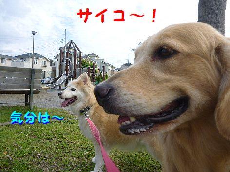 d_20120928074247.jpg