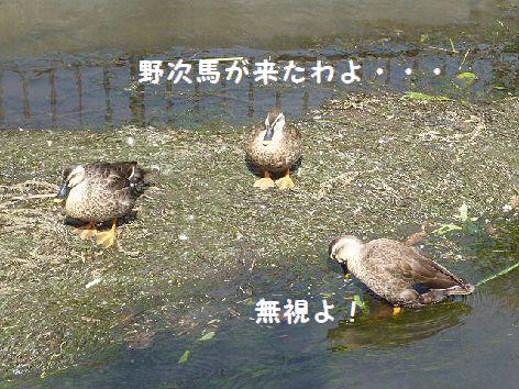 d_20120930080135.jpg