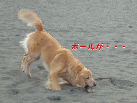 d_20121010073659.jpg