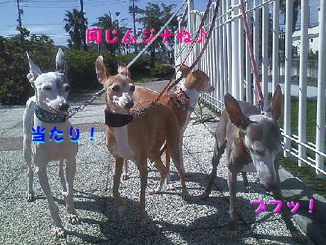 d_20121011073740.jpg