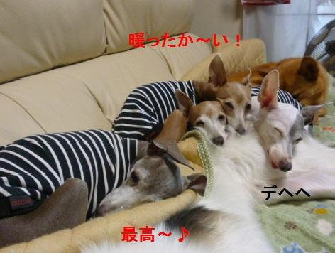 d_20121111082055.jpg