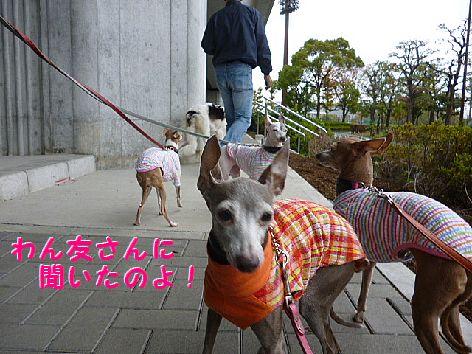 d_20121119073226.jpg
