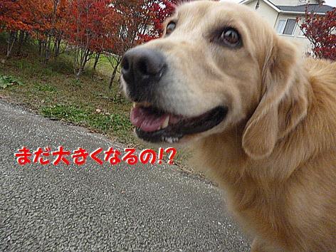 d_20121201094353.jpg